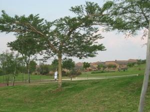 pretoria vacant land