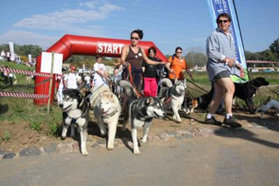 Dog Day 2010