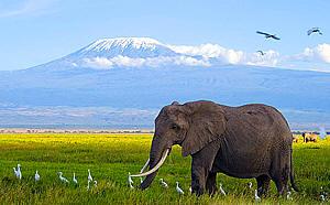 Amboseli Safaris