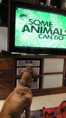 Lisa watching Animal Planet