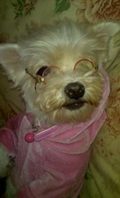 She was constantly biting my glasses so i got her a pair and she stopt;..lol